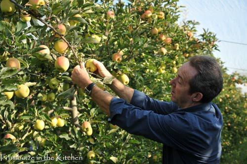 Albert, nous montre comment la cueillir cette jolie pomme blushée