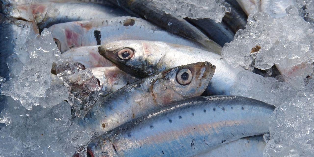 Sardines Connétable : sans peau ni arête