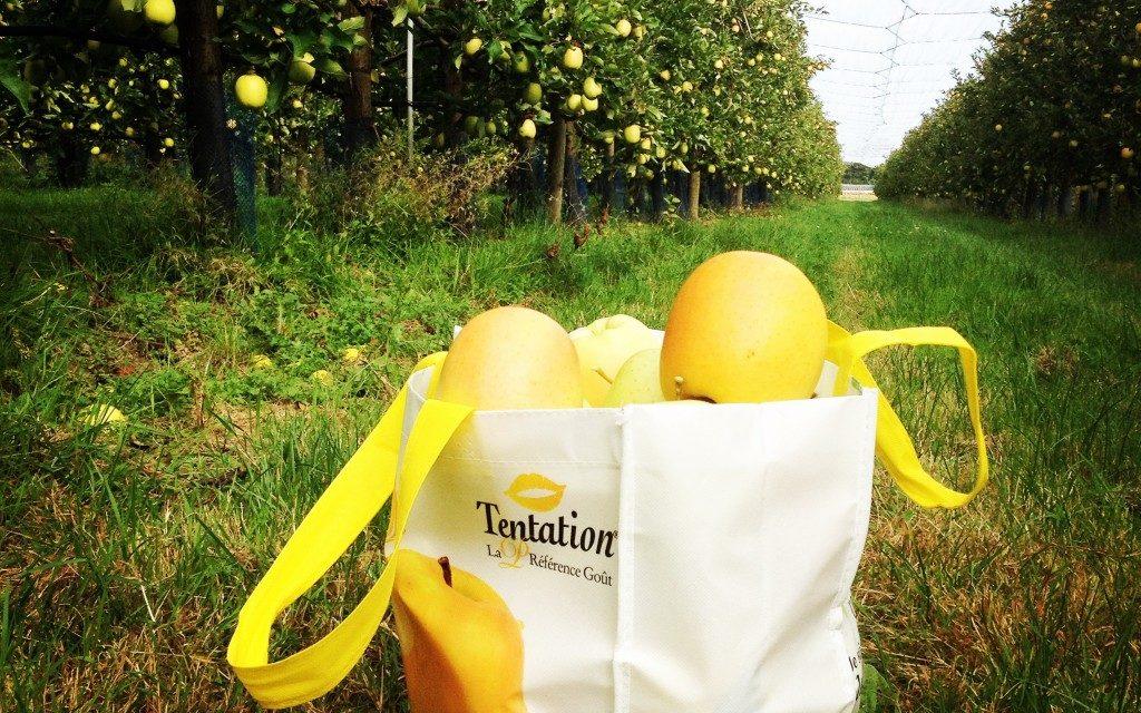 Découverte de la pommes Tentation