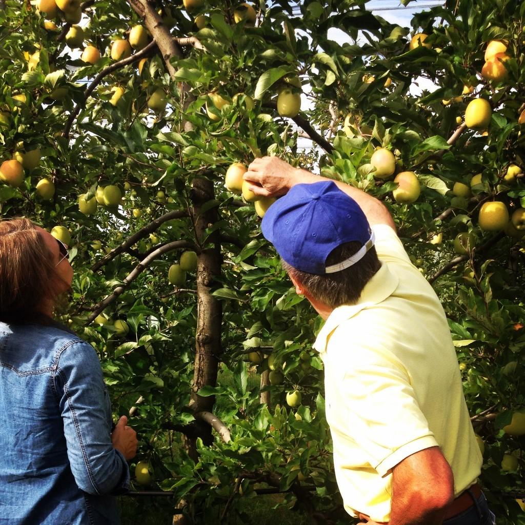 Démonstration de cueillette de la pomme tentation