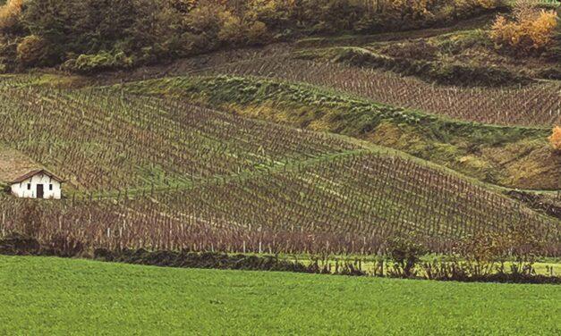 Voyage gourmand vers les vins du Jura